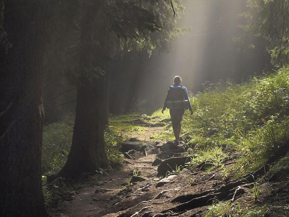 Warum nur fünf Minuten im Wald so gesund sind