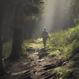 Nur 5 Minuten im Wald sind schon so gesund