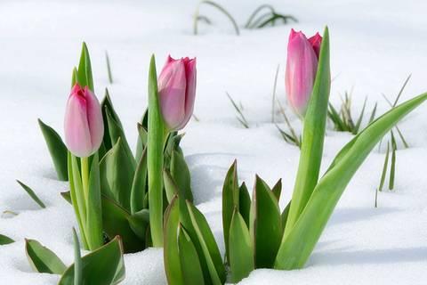 Frühlings-Schock: Am Wochenende kommt der Schnee zurück!