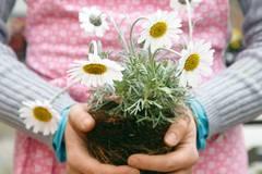 Gewusst wie: Tipps für den Garten