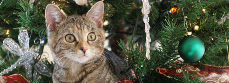 Zum Kugeln: Katzen sind das neue Lametta