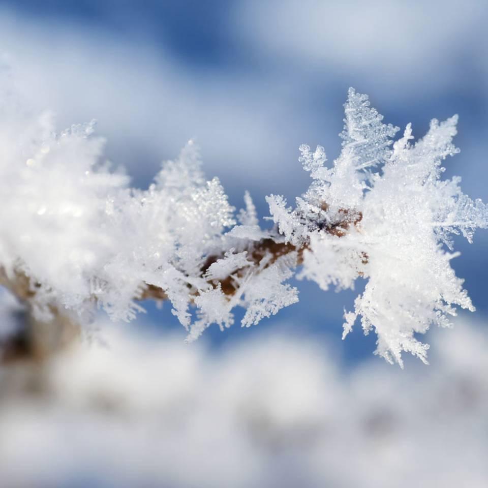 Winter-Wunder: So entsteht eine Schneeflocke