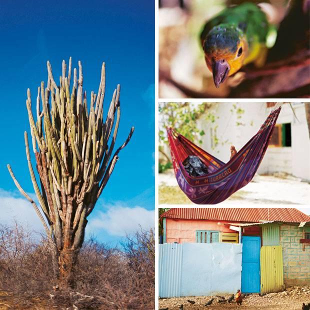 Urlaub auf Curaçao: Ferien wie ein Cocktail | BRIGITTE.de