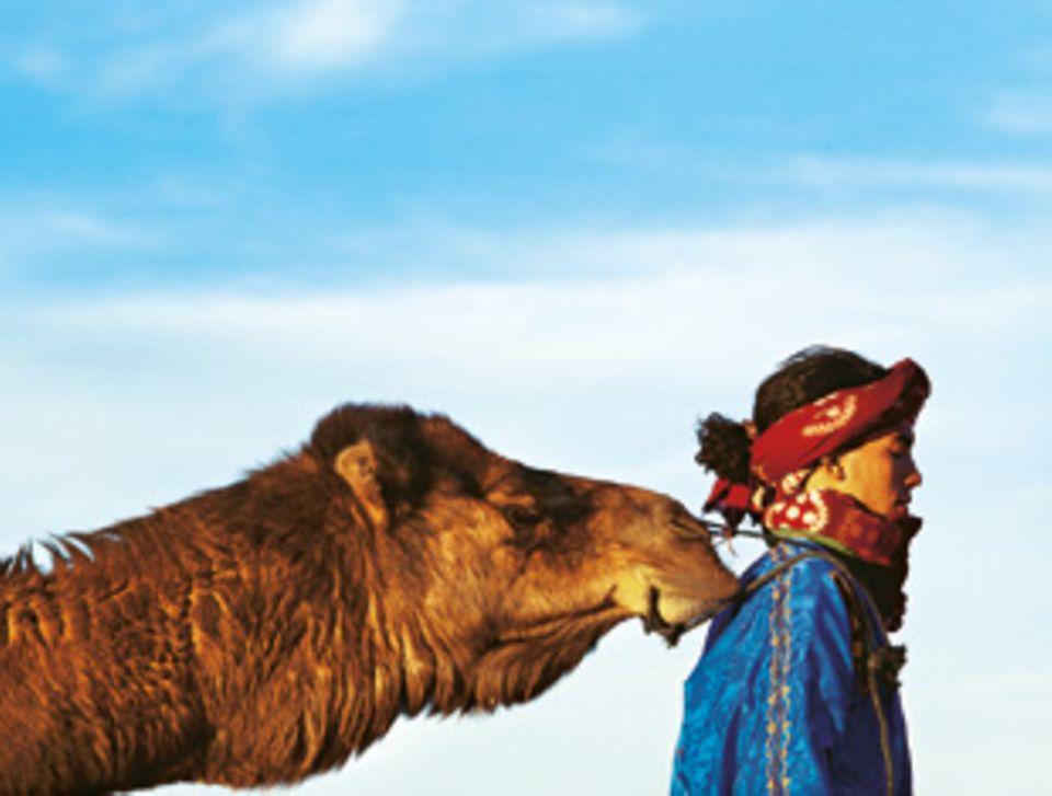 Kamele sind anhänglich, Jimi geht besonders gern auf Tuchfühlung