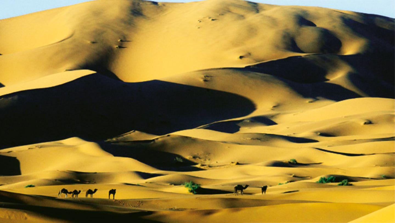 Sonnengruß in der Wüste