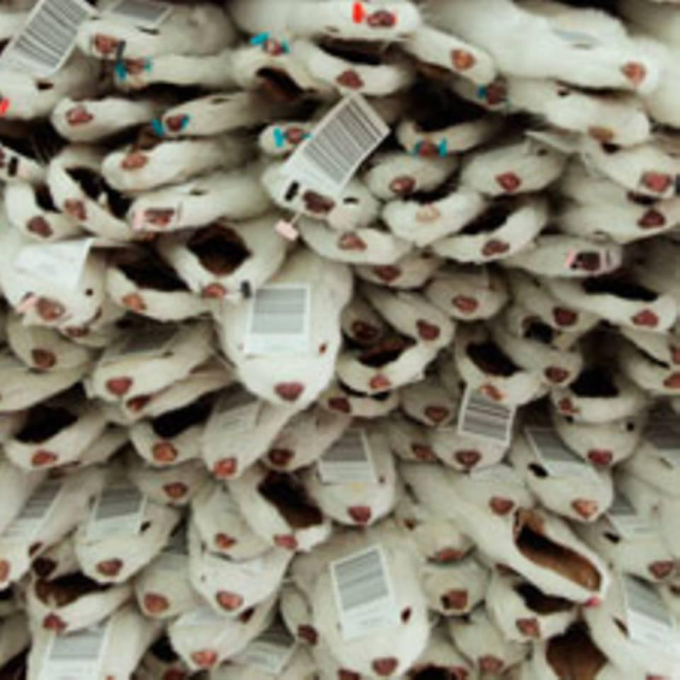 Die Wahrheit über Pelz: Grausame Fakten hinter Kragen, Mütze & Co