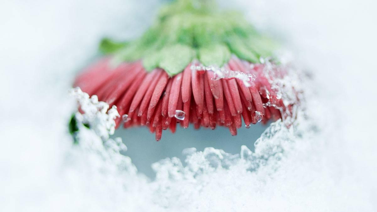 Pflanzenpflege pflanzen berwintern 10 tipps f r balkon for Balkonpflanzen winter