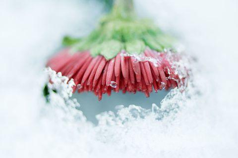 Pflanzen überwintern: 10 Tipps für Balkon & Terrasse