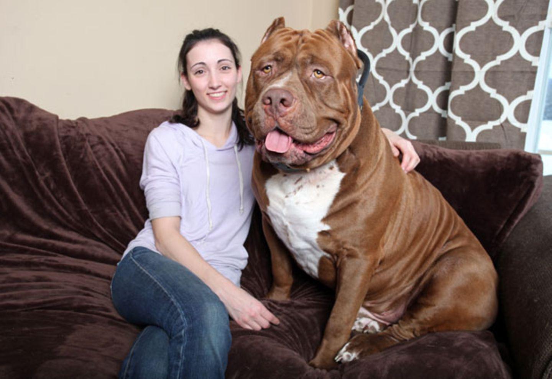 Diesen Riesenhund muss man einfach liebhaben