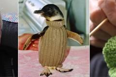 109-jähriger Australier strickt Pullis für Pinguine