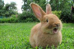 Baby & Kaninchen: Eigentlich waren sie ziemlich gute Freunde ...