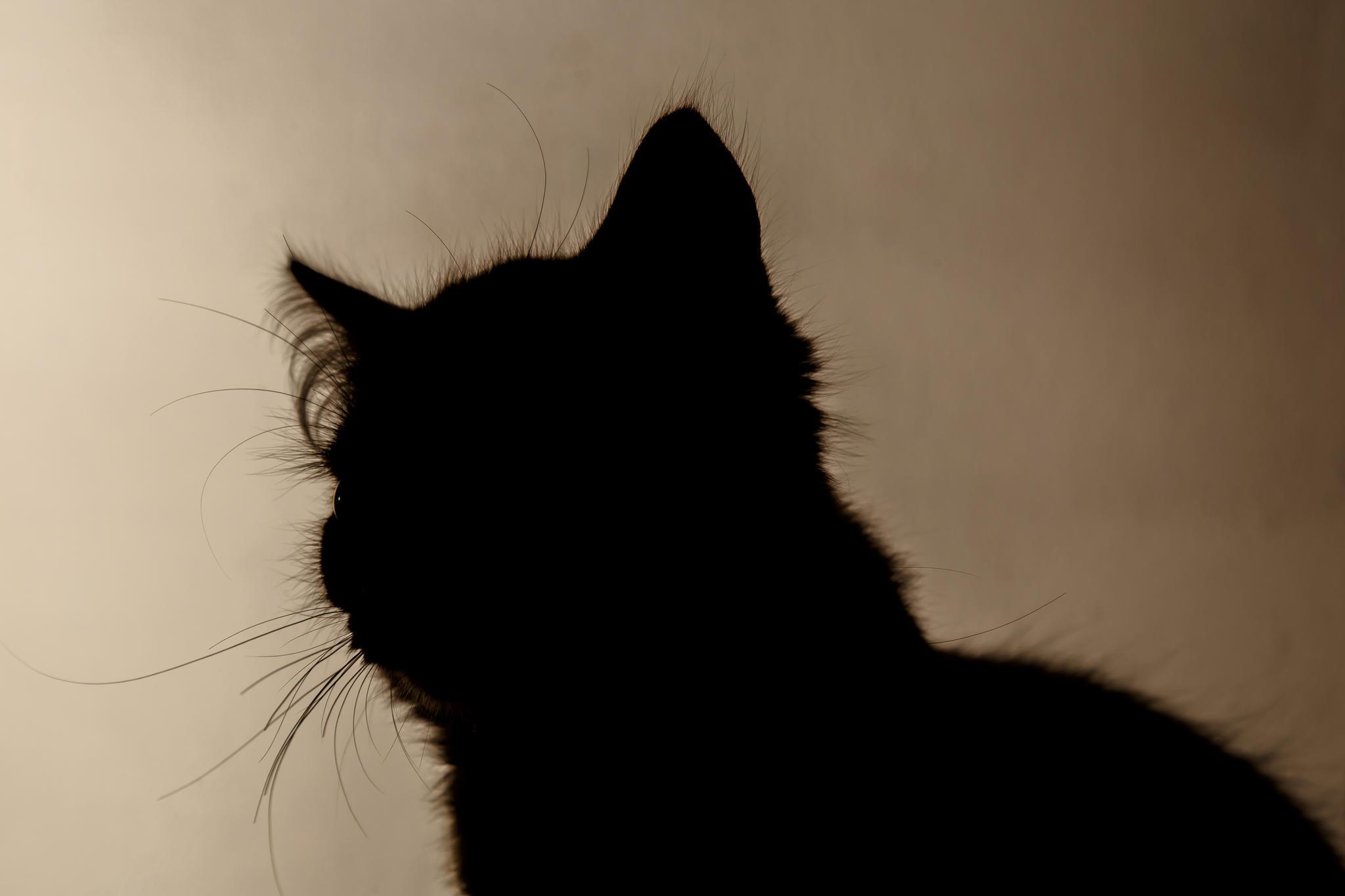 optische t uschung rauf oder runter diese katze ist. Black Bedroom Furniture Sets. Home Design Ideas