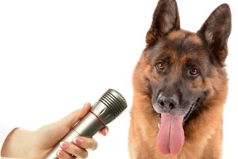 Gehorcht auf Wort: Ein Polizeihund macht Aussage