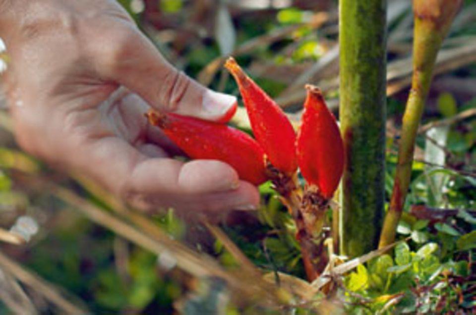 Die Wirkstoffe aus dem Inneren der Longoza-Früchte regen den Hautstoffwechsel an.