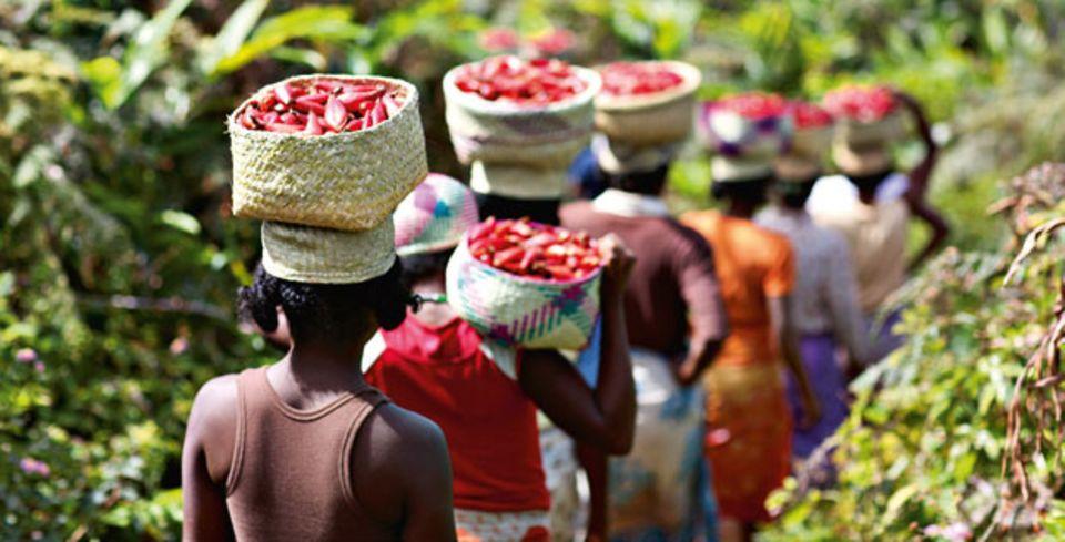 Bei der jährlichen Ernte im Dior-Garten auf Madagaskar hilft das ganze Dorf.