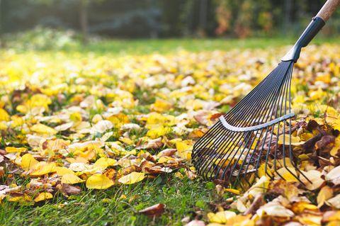 Weg mit dem Herbstlaub - mit diesem Trick geht das ganz schnell!