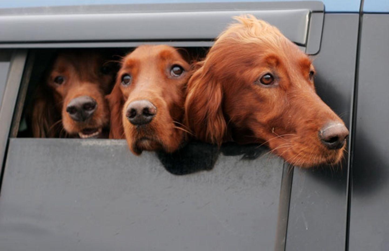 Gute Nachricht für Tierfreunde: Dieses Gesetz war überfällig!