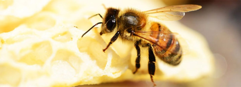 """bee careful"": Werdet Bienenhelferin!"