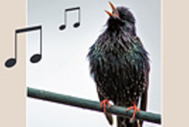 Vogelstimmen-Quiz: Wer piept denn da?