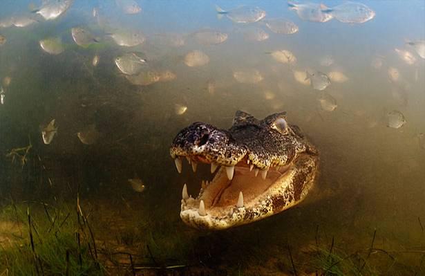 Veolia Environnement Wildlife Award: Tierfotografie: Die besten Bilder des Jahres