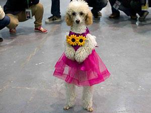 Verkleideter Hund in China: Ist das tierisches Glück?