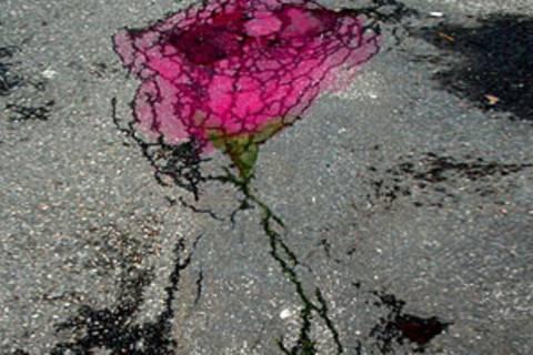 Asphalt-Rosen zum Valentinstag