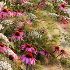 Naturfotografie: Die Naturfotos des Jahres: Von Blumen und Bienen
