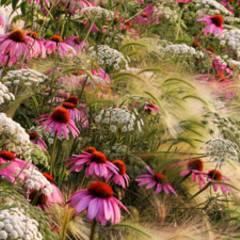 Die Naturfotos des Jahres: Von Blumen und Bienen