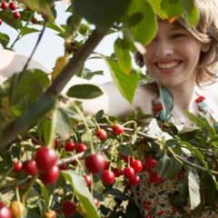 Mundraub.org: Wo wächst Bärlauch, wo Kirschen?