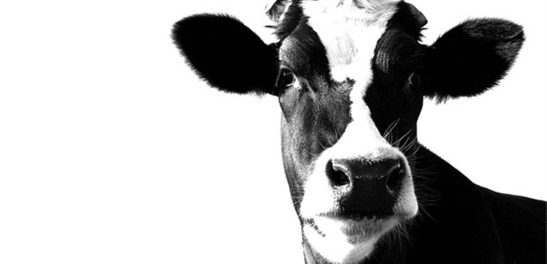 Mehr Schutz für Tiere: Was wir selbst dafür tun können