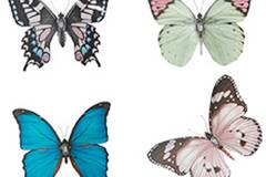 Das Set aus vier Schmetterlings-Magneten holt den Frühling an die Kühlschranktür. Von Bertine, um 5 Euro. Zu Bestellen über www.bertine.de