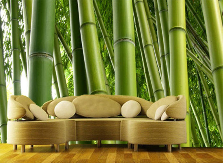 Ein Bambus-Wald für's Wohnzimmer. Um  100 Euro, über Bilder-Welten. Größe: ca. 270 x 144 cm.