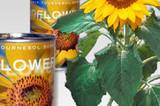 Wem Blumentöpfe zu umständlich sind, der kauft sich gleich die Sonnenblume in der Dose. Die müsst ihr nur öffnen, regelmäßig gießen und schon sprießt es auf dem Balkon. Um 6 Euro bei Impressionen.