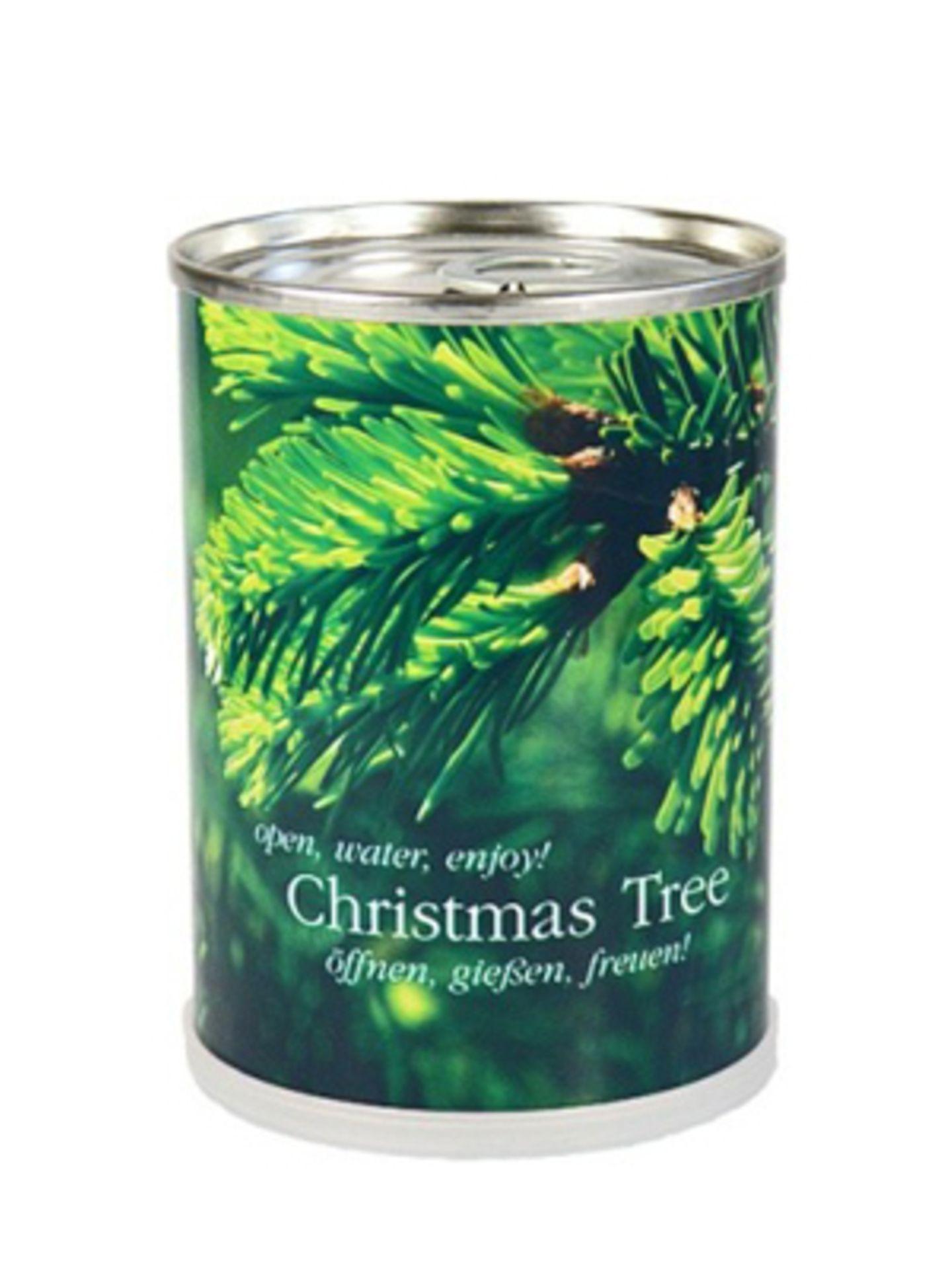 Kein Platz für einen Tannenbaum im winzigen WG-Zimmer? Jetzt gibt's die Lösung: Der Tannenbaum aus der Dose sorgt für die nötige weihnachtliche Vorfreude daheim und macht dabei nicht viel mehr Arbeit als ein bisschen Gießen. Von YPSILON, um 6 Euro. Und platzsparend ist er obendrein.