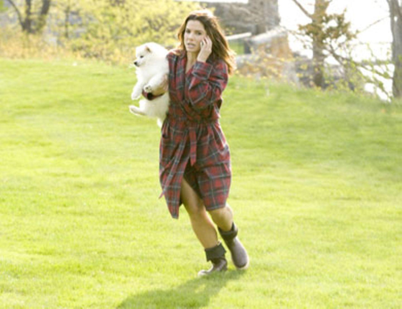 Margaret (Sandra Bullock) hat entgegen aller Warnungen den Hund in den Garten gelassen. Nun muss sie ihn und ihr Handy vor einem angriffslustigen Raubvogel schützen.