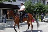 """Jeder scheint in Miami ein Fernseh- oder zumindest Medienstar werden zu wollen. Als dieser Polizist erfährt, dass Journalisten zugegen sind, gibt er alles: Sein Pferd – Name: """"Big Show"""" – muss mitten auf der Straße dressurübungen vollführen: Schenkelweichen, Rückwärtsrichten und Hinterhandwendung. Zwischendurch regelt sein Reiter den Verkehr des Design Districts."""