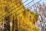Seltsames Grünzeug hat die Herrschaft über einen Baum in Chiang Mai ergriffen.