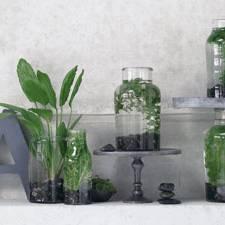 Dekorieren zimmerpflanzen berraschend inszeniert for Wasserpflanzen ikea