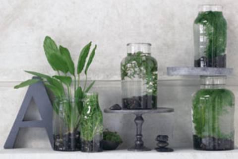 Zimmerpflanzen, überraschend inszeniert
