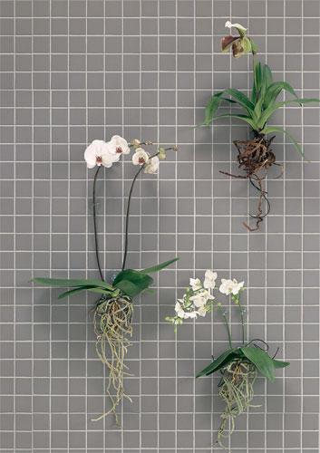 dekorieren zimmerpflanzen berraschend inszeniert. Black Bedroom Furniture Sets. Home Design Ideas