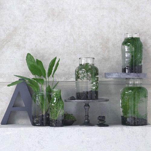 Dekorieren: Zimmerpflanzen, überraschend Inszeniert