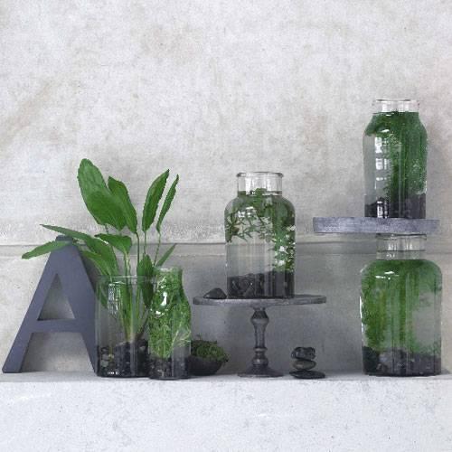 Dekorieren: Zimmerpflanzen, überraschend inszeniert ...