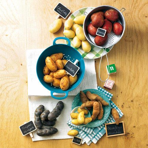 Kleine Knollenkunde für Kartoffel-Fans
