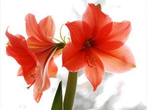 Die Bedeutung der Blumen