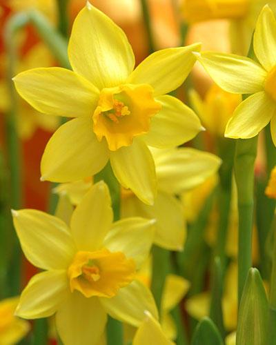 Garten: Die Bedeutung der Blumen | BRIGITTE.de