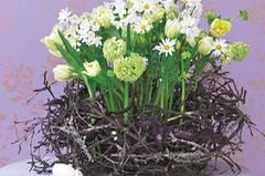 Blumennest aus Tulpen