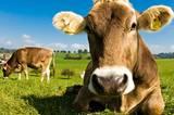 Bio-Ernährung - die Fakten