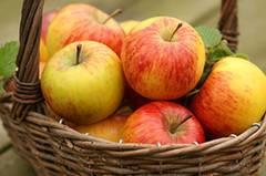 Apfel - der Sattmacher