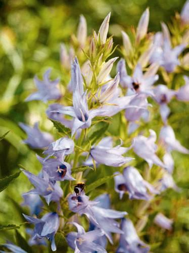 Garten blumen blau  Für Balkon und Garten: Blaue Blumen und Pflanzen | BRIGITTE.de