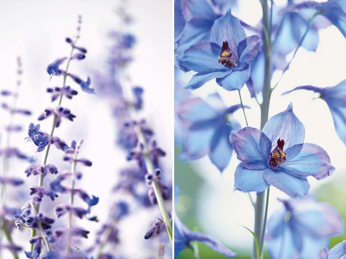 Blaue Blumen und Pflanzen